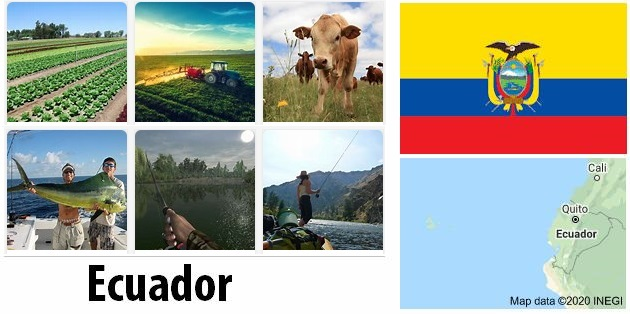 Agriculture and fishing of Ecuador