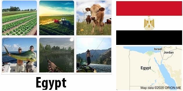 Agriculture and fishing of Egypt