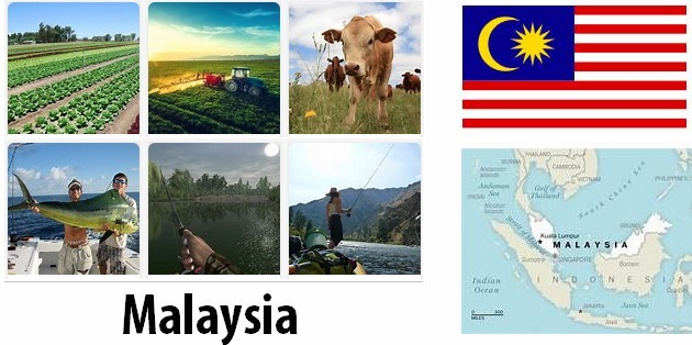 Agriculture and fishing of Malaysia