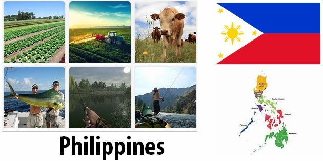 Agriculture and fishing of Philippines