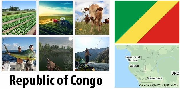 Agriculture and fishing of Republic of Congo