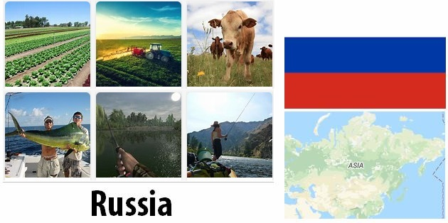 Agriculture and fishing of Russia