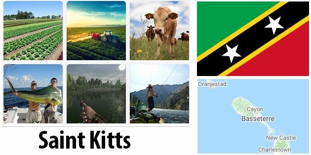 Agriculture and fishing of St. Kitts