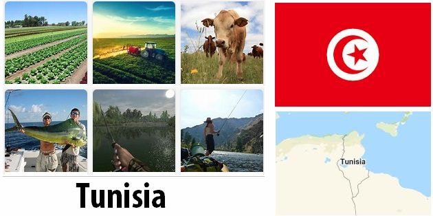 Agriculture and fishing of Tunisia
