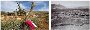 Palestine Deforestation