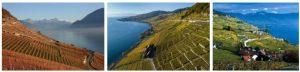 Vineyard Terraces in Lavaux (World Heritage)